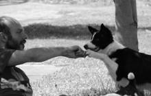 Educazione Del Cucciolo